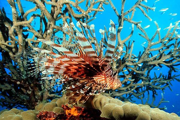 Fiji Islands Update and Report