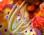 Wakatobi Wide-Angle - Copyright John Holder